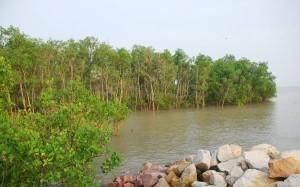 Mangrove forest Morib